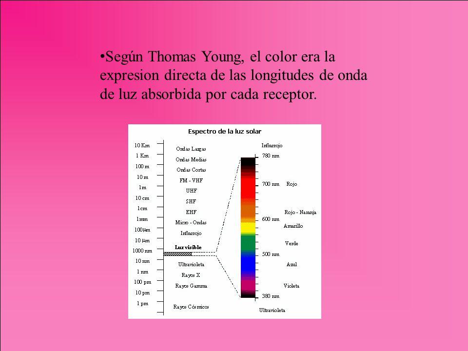 Según Thomas Young, el color era la expresion directa de las longitudes de onda de luz absorbida por cada receptor.