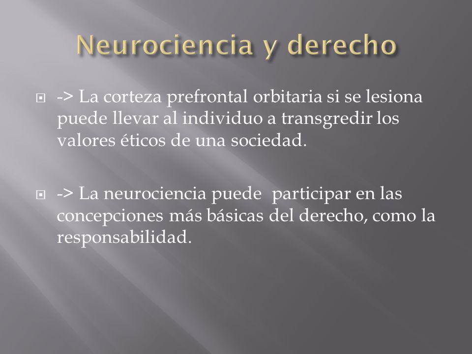 Neurociencia y derecho