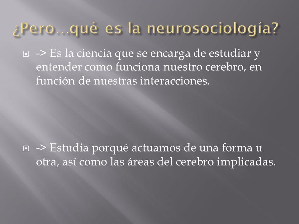 ¿Pero…qué es la neurosociología