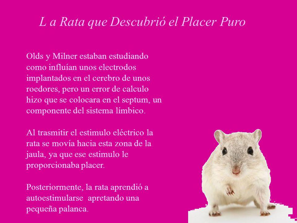 L a Rata que Descubrió el Placer Puro