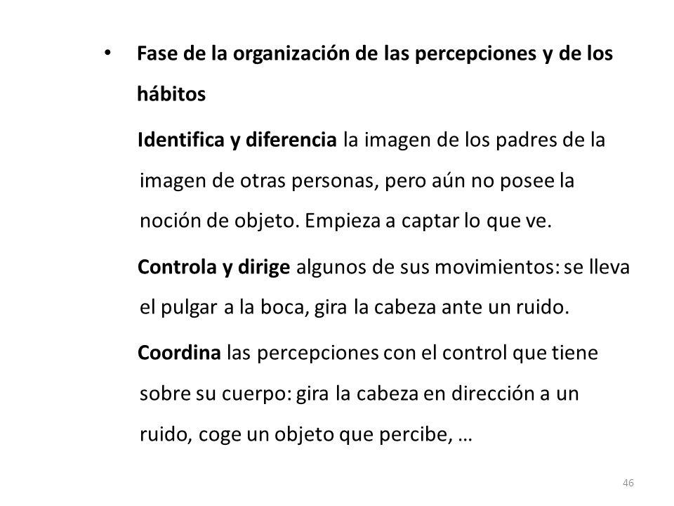 Fase de la organización de las percepciones y de los hábitos (3 – 6 meses)