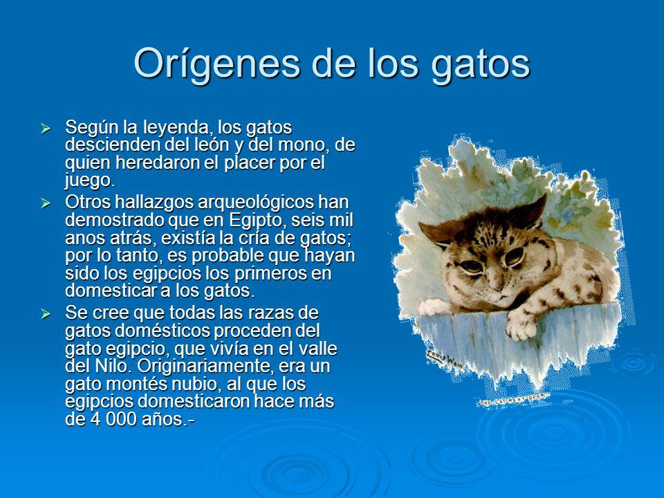 Orígenes de los gatos Según la leyenda, los gatos descienden del león y del mono, de quien heredaron el placer por el juego.