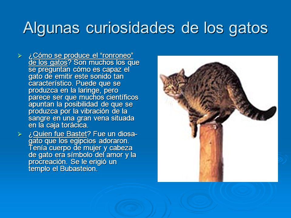 Algunas curiosidades de los gatos