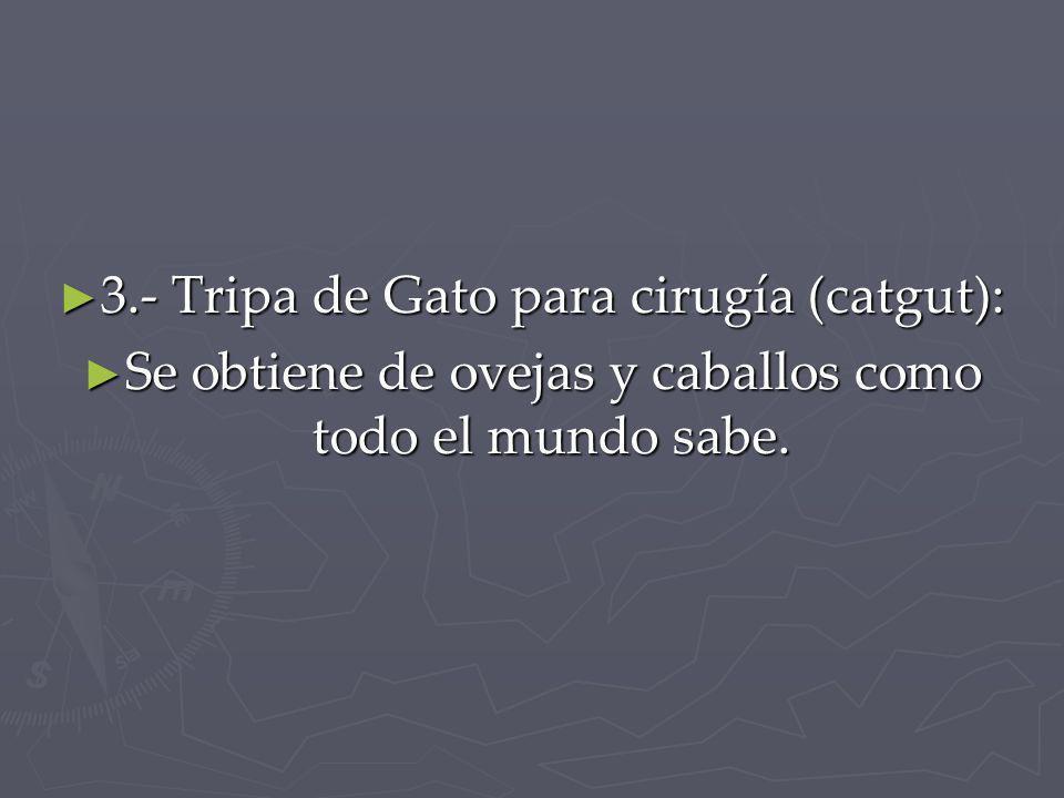 3.- Tripa de Gato para cirugía (catgut):