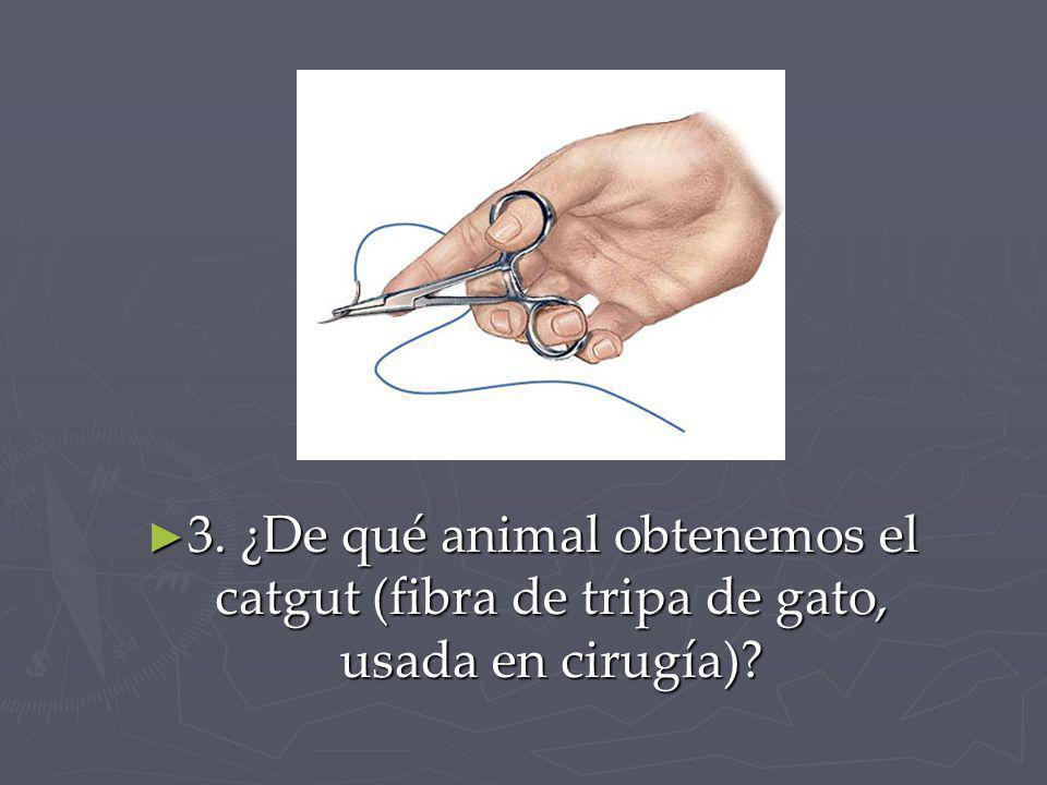 3. ¿De qué animal obtenemos el catgut (fibra de tripa de gato, usada en cirugía)