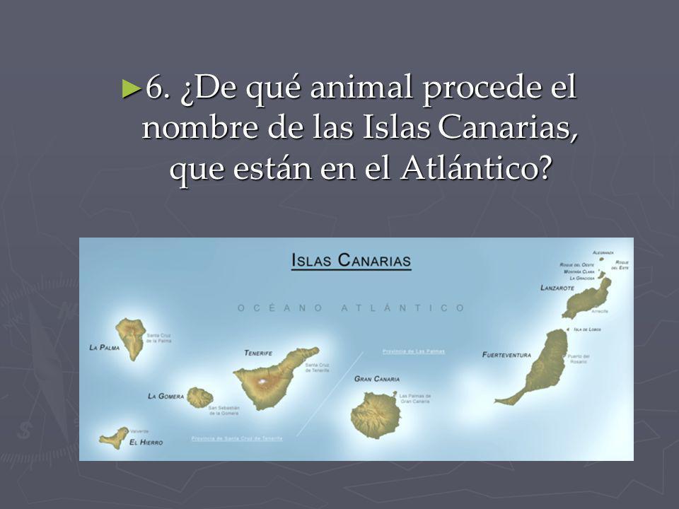 6. ¿De qué animal procede el nombre de las Islas Canarias, que están en el Atlántico