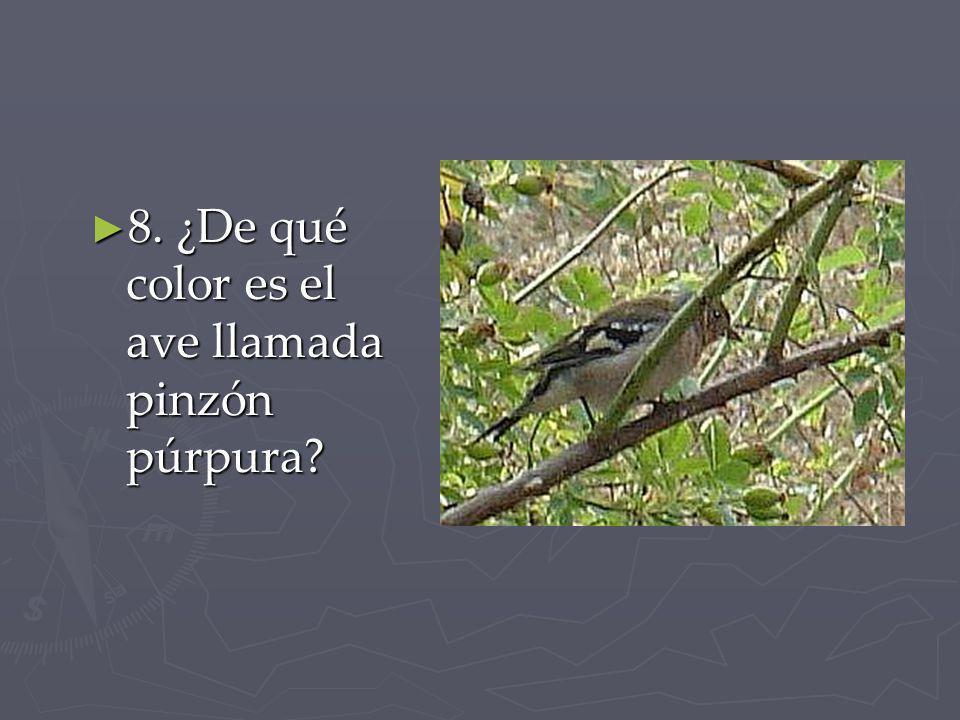 8. ¿De qué color es el ave llamada pinzón púrpura