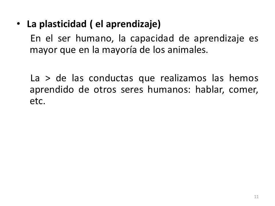 La plasticidad ( el aprendizaje)