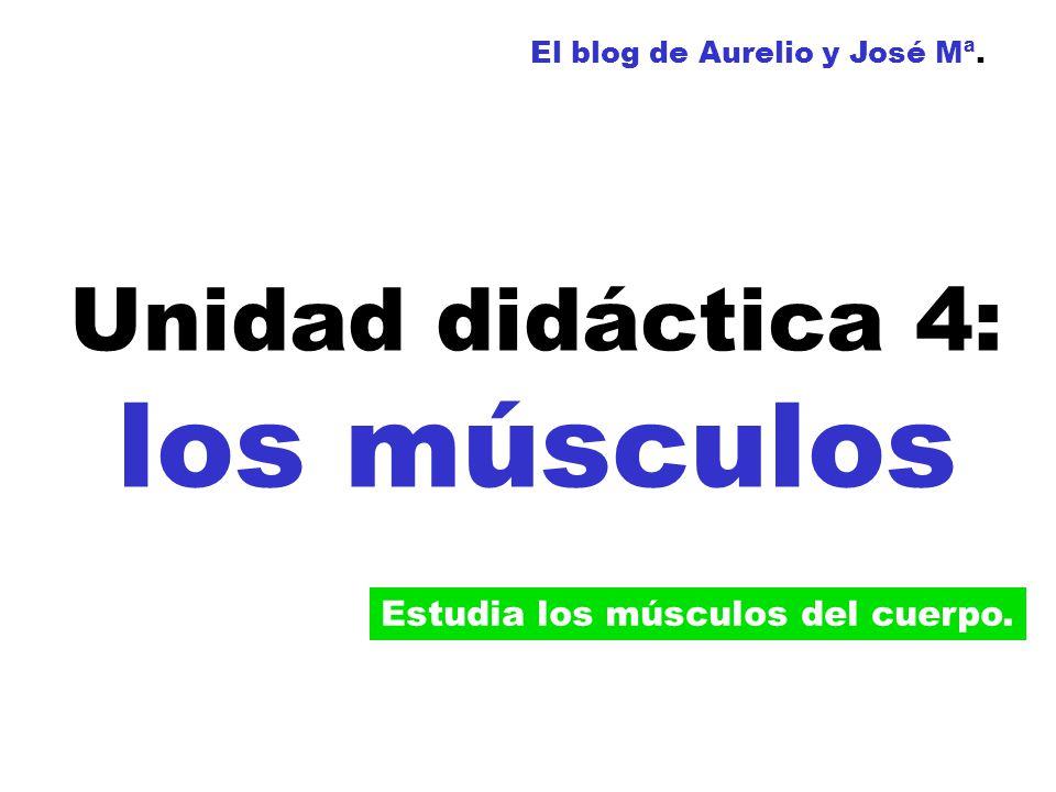 Unidad didáctica 4: los músculos