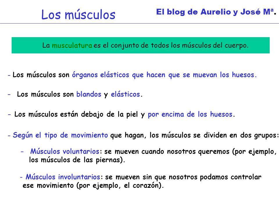 Los músculos El blog de Aurelio y José Mª.