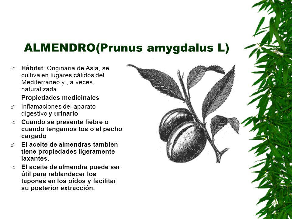 ALMENDRO(Prunus amygdalus L)