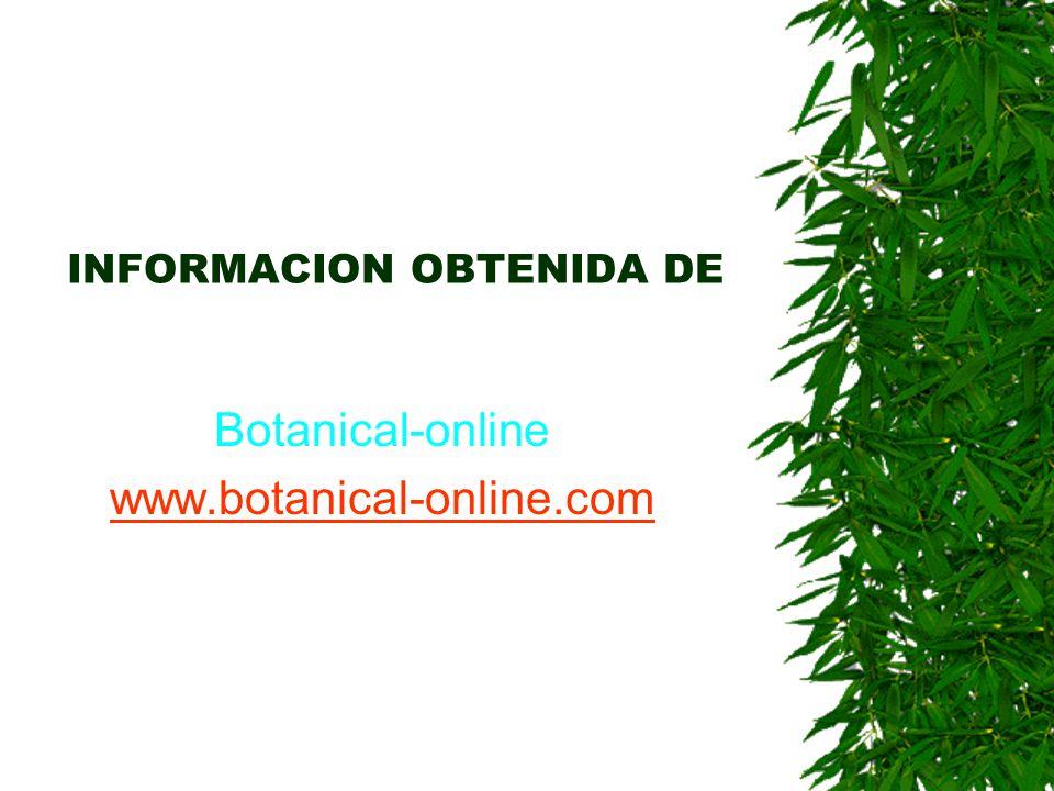 INFORMACION OBTENIDA DE
