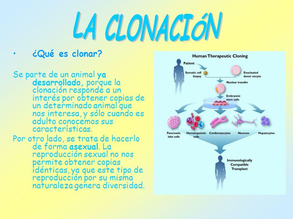 LA CLONACIÓN ¿Qué es clonar