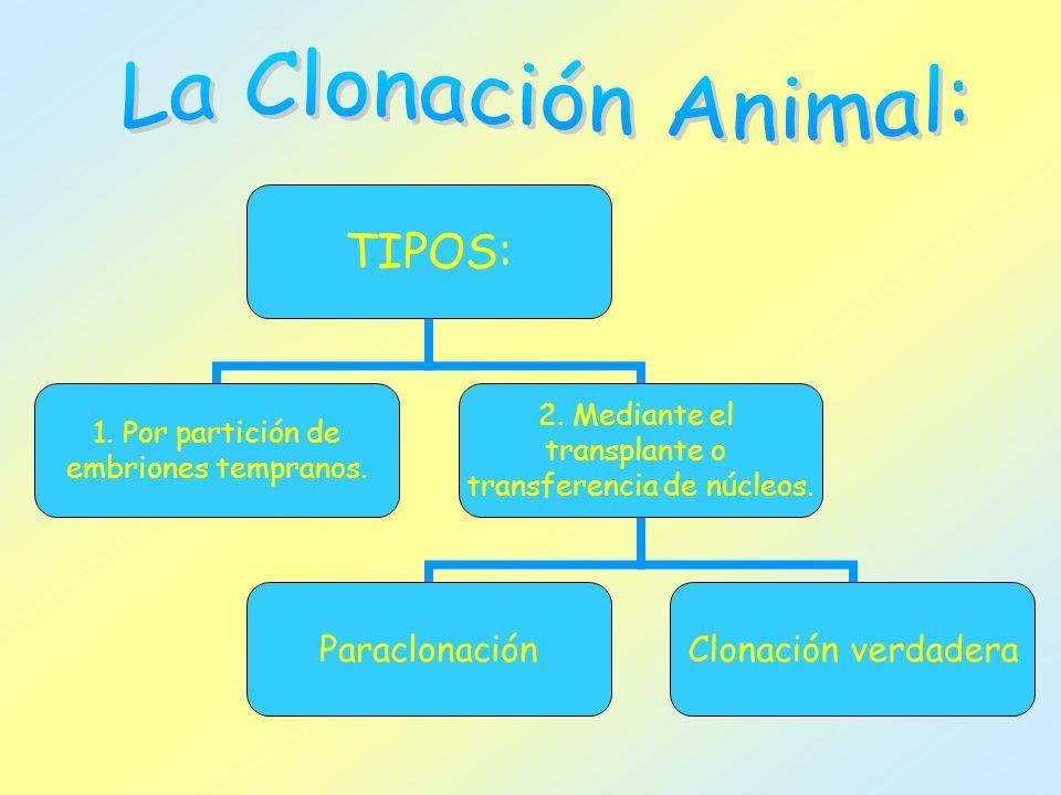 La Clonación Animal: