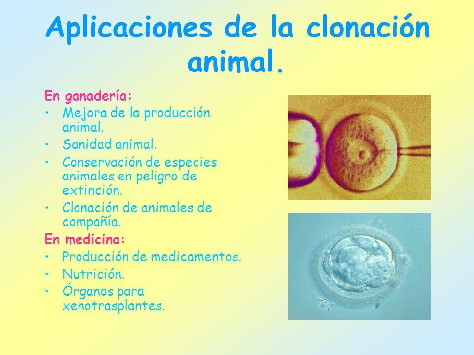 Aplicaciones de la clonación animal.