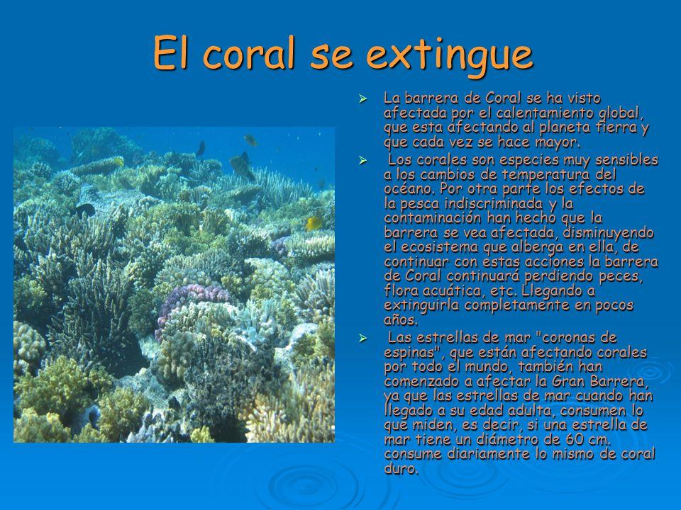 El coral se extingue