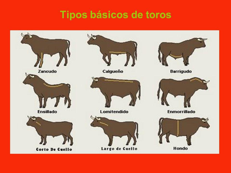 Tipos básicos de toros