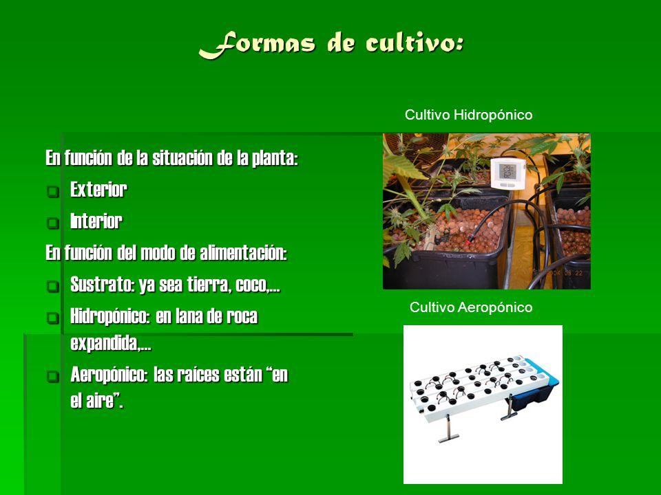 Formas de cultivo: En función de la situación de la planta: Exterior
