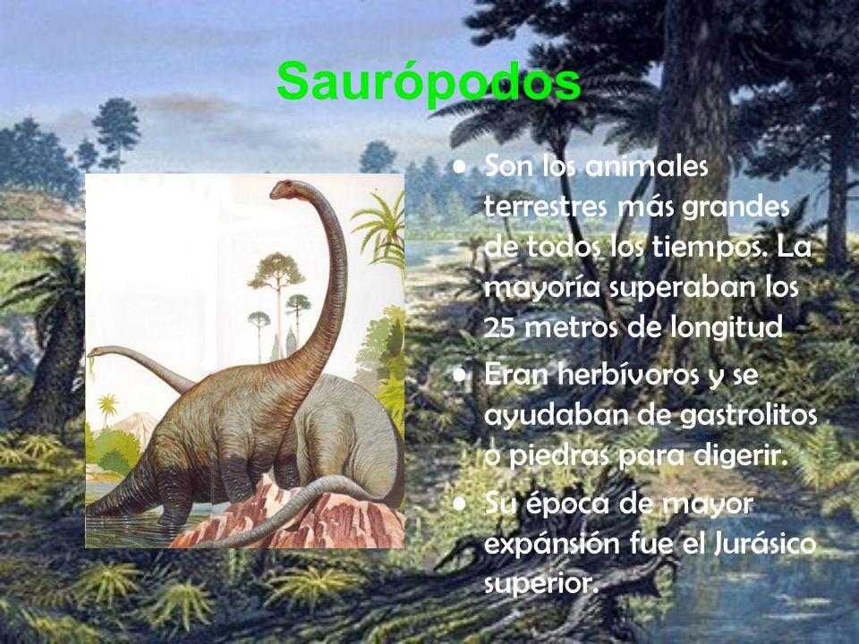 Saurópodos Son los animales terrestres más grandes de todos los tiempos. La mayoría superaban los 25 metros de longitud.