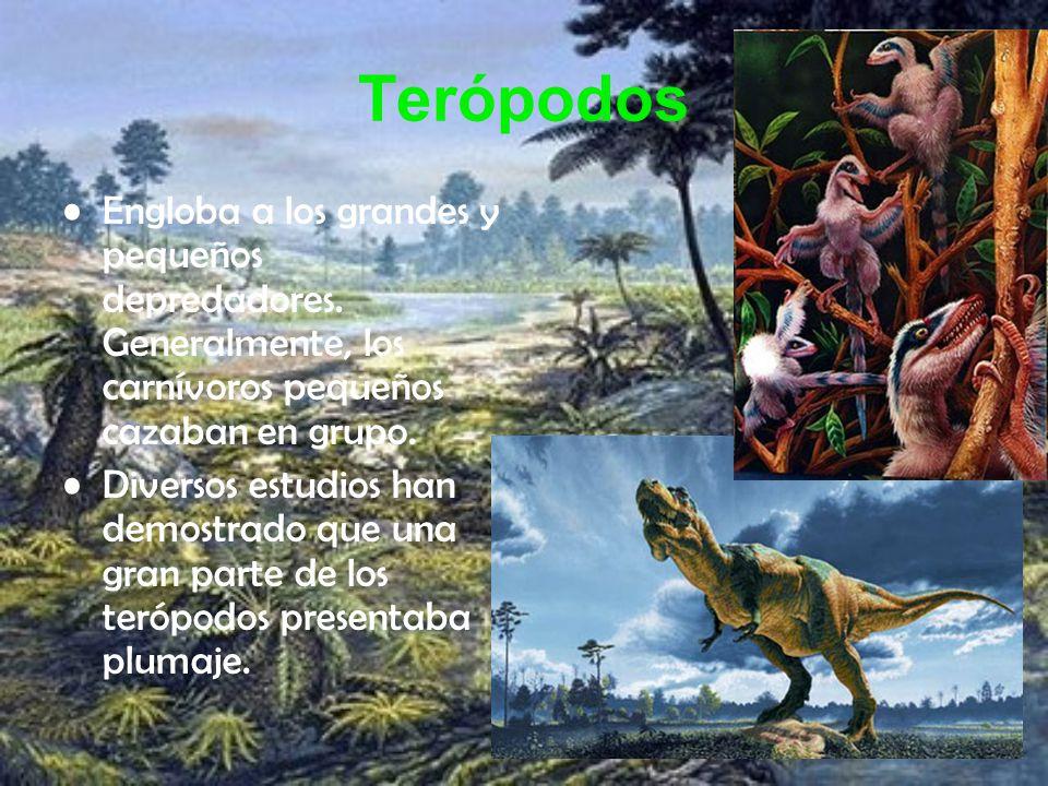 Terópodos Engloba a los grandes y pequeños depredadores. Generalmente, los carnívoros pequeños cazaban en grupo.