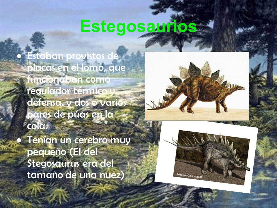 Estegosaurios Estaban provistos de placas en el lomo, que funcionaban como regulador térmico y defensa, y dos o varios pares de púas en la cola.