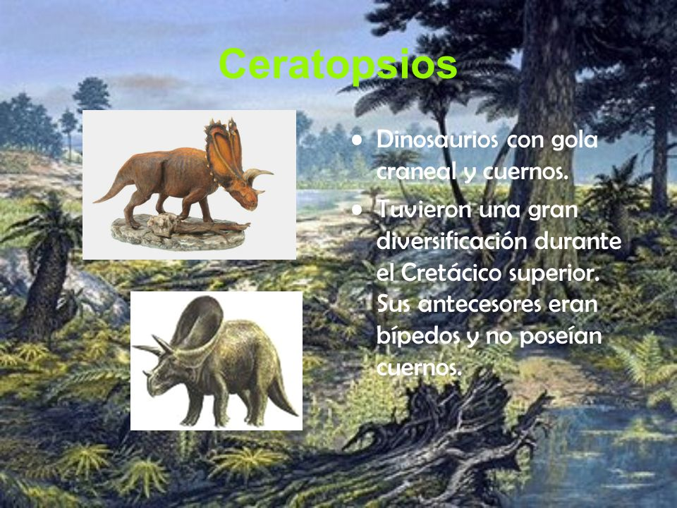 Ceratopsios Dinosaurios con gola craneal y cuernos.