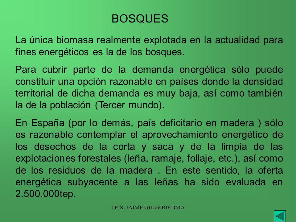 BOSQUES La única biomasa realmente explotada en la actualidad para fines energéticos es la de los bosques.