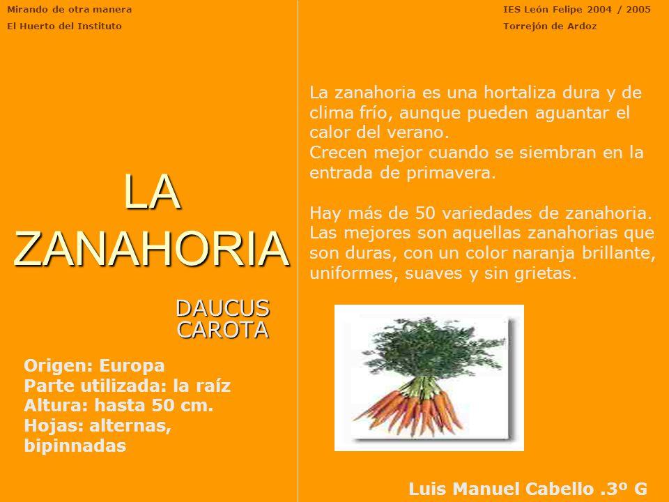 LA ZANAHORIA DAUCUS CAROTA