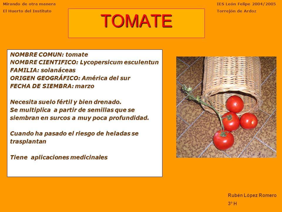 TOMATE NOMBRE COMUN: tomate NOMBRE CIENTIFICO: Lycopersicum esculentun