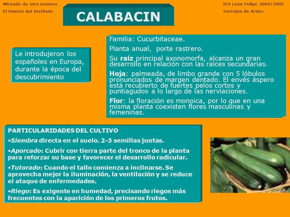 CALABACIN Familia: Cucurbitaceae. Planta anual, porte rastrero.