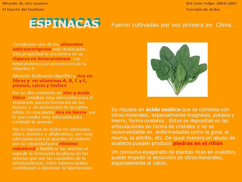 acido urico uricemia sintesis acido urico bioquimica calculo renal acido urico dieta