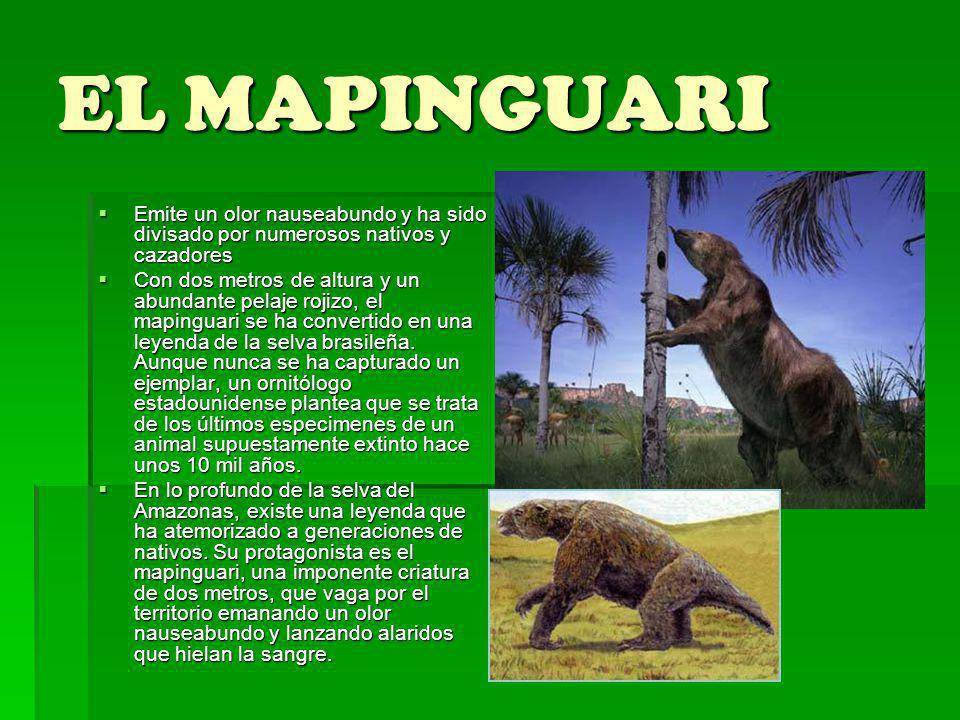 EL MAPINGUARI Emite un olor nauseabundo y ha sido divisado por numerosos nativos y cazadores.