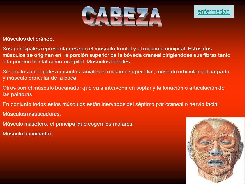 CABEZA enfermedad Músculos del cráneo.
