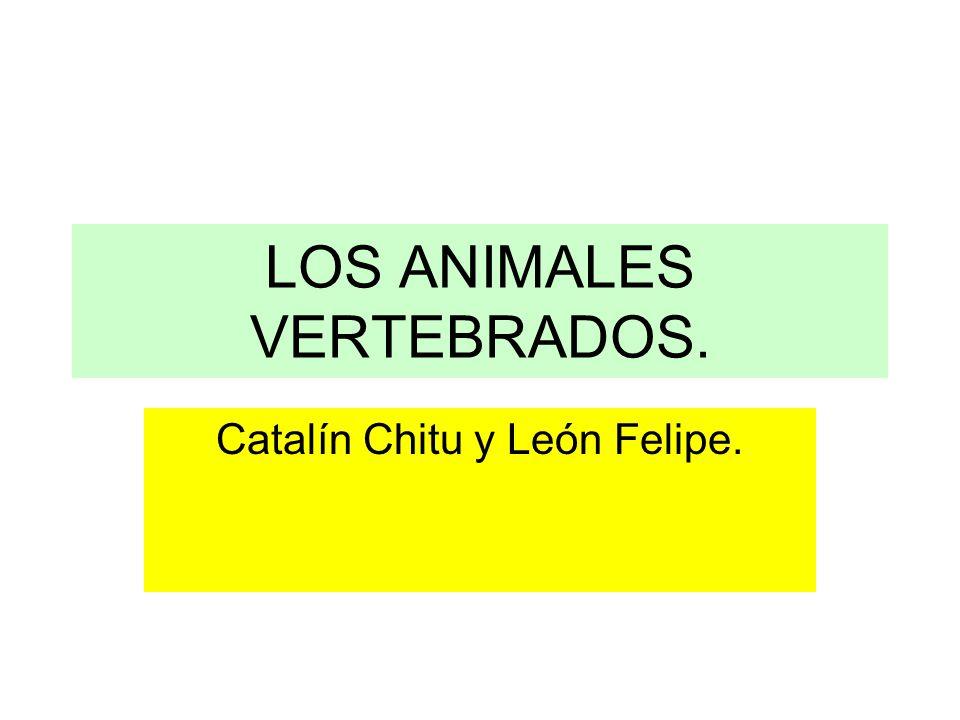 LOS ANIMALES VERTEBRADOS.