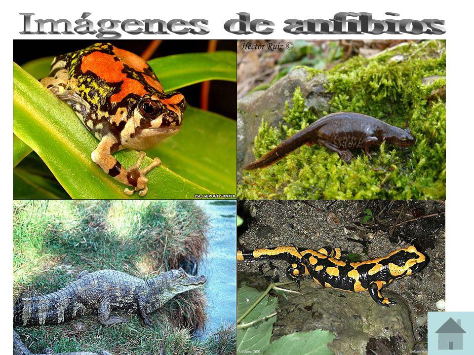 Imágenes de anfibios