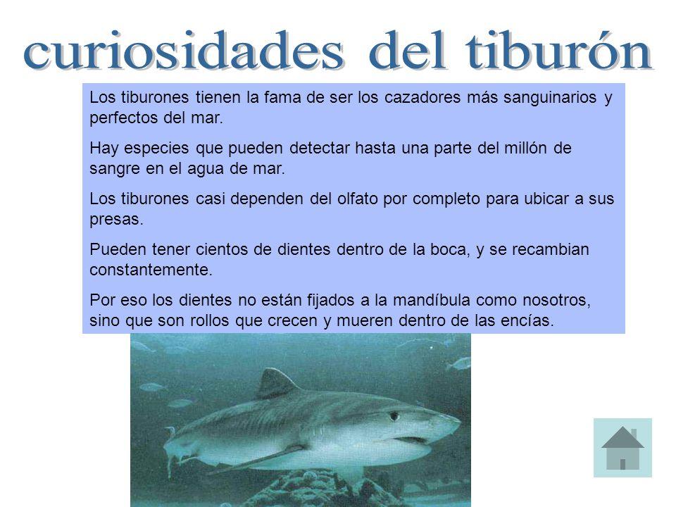 curiosidades del tiburón