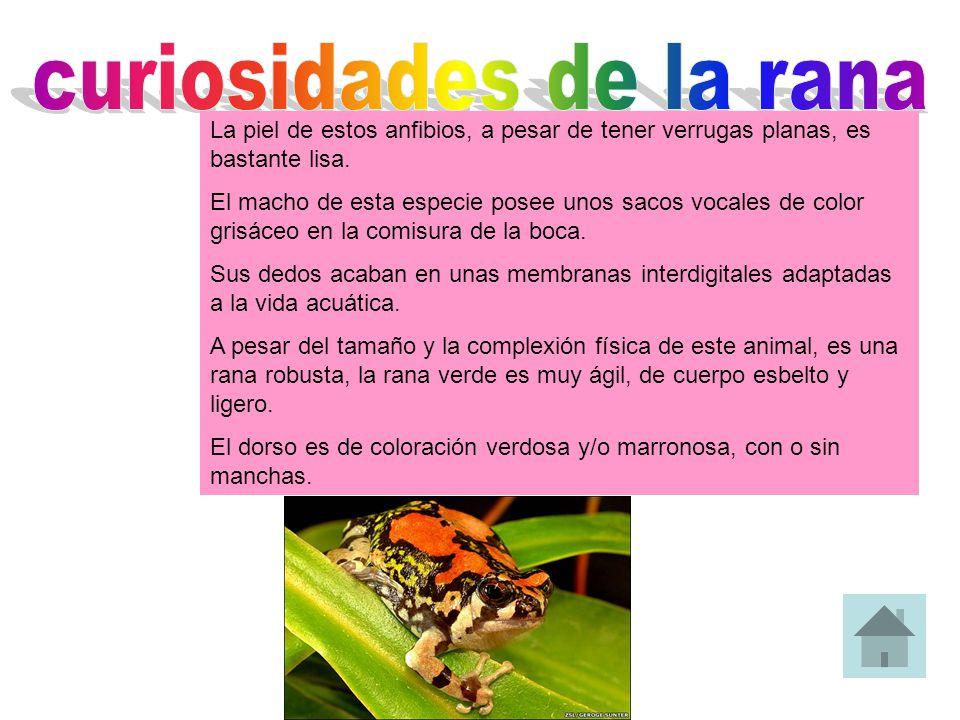 curiosidades de la rana