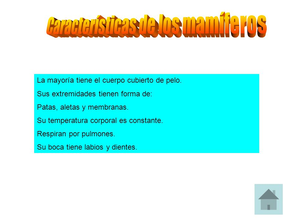 Características de los mamíferos