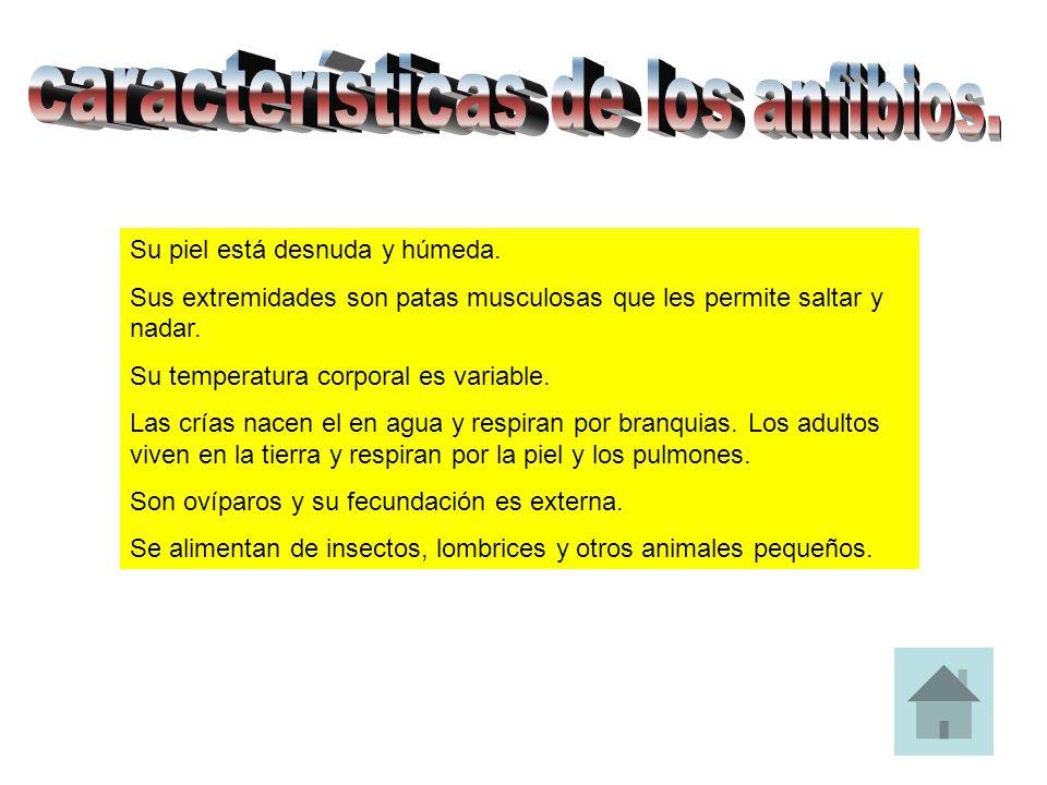 características de los anfibios.