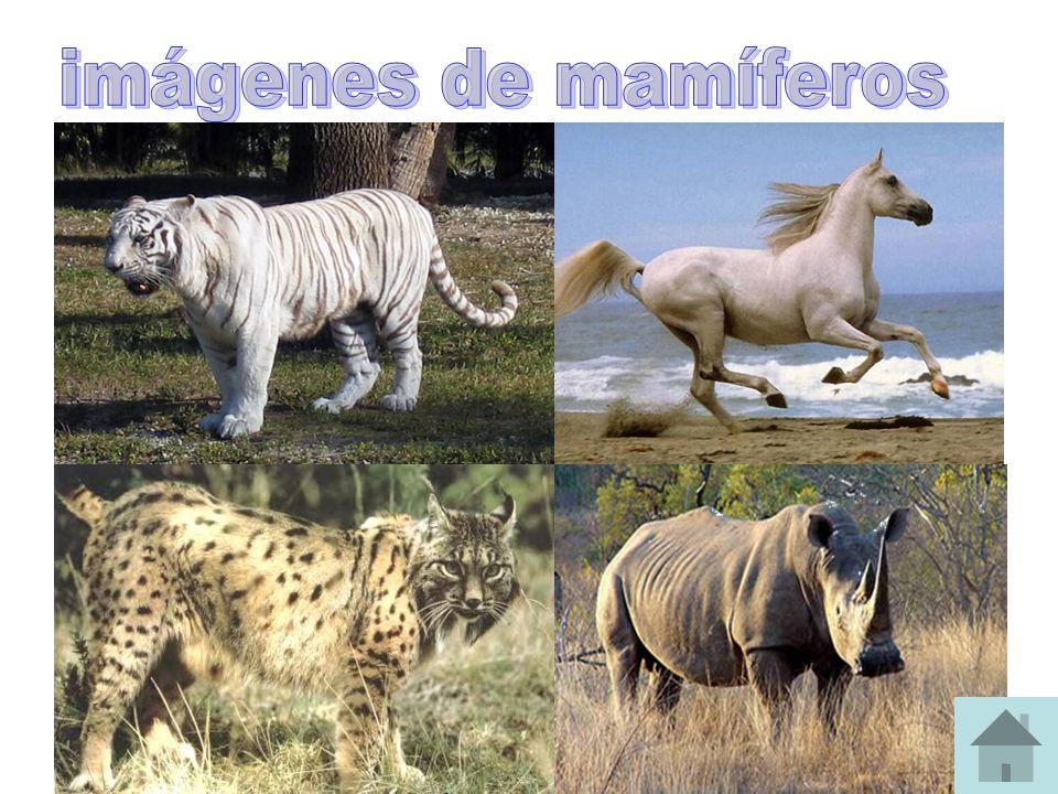 imágenes de mamíferos