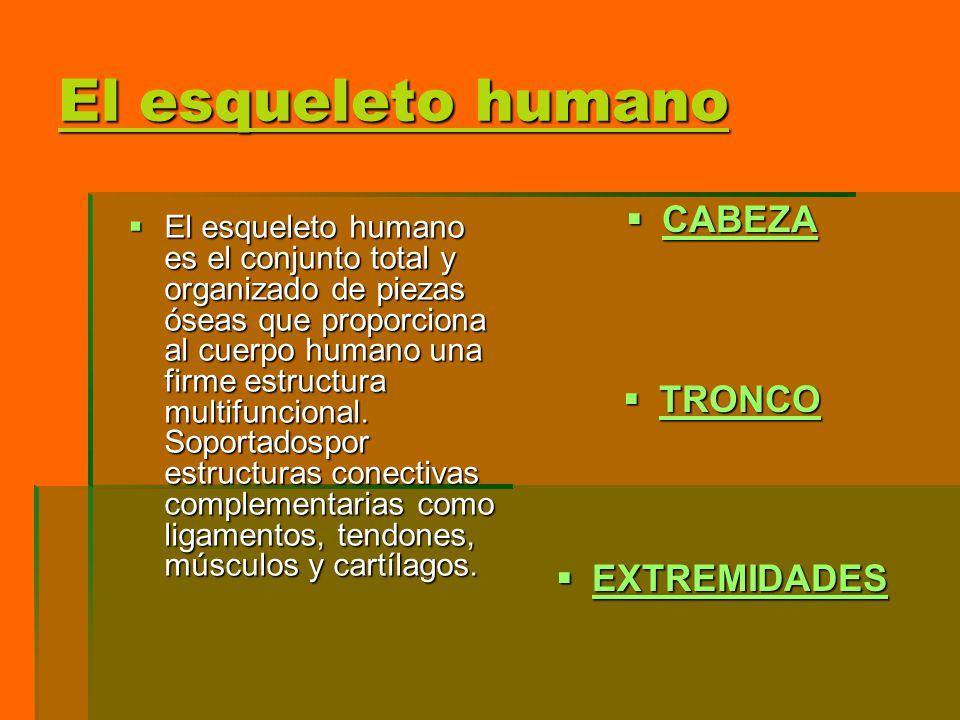 El esqueleto humano CABEZA TRONCO EXTREMIDADES
