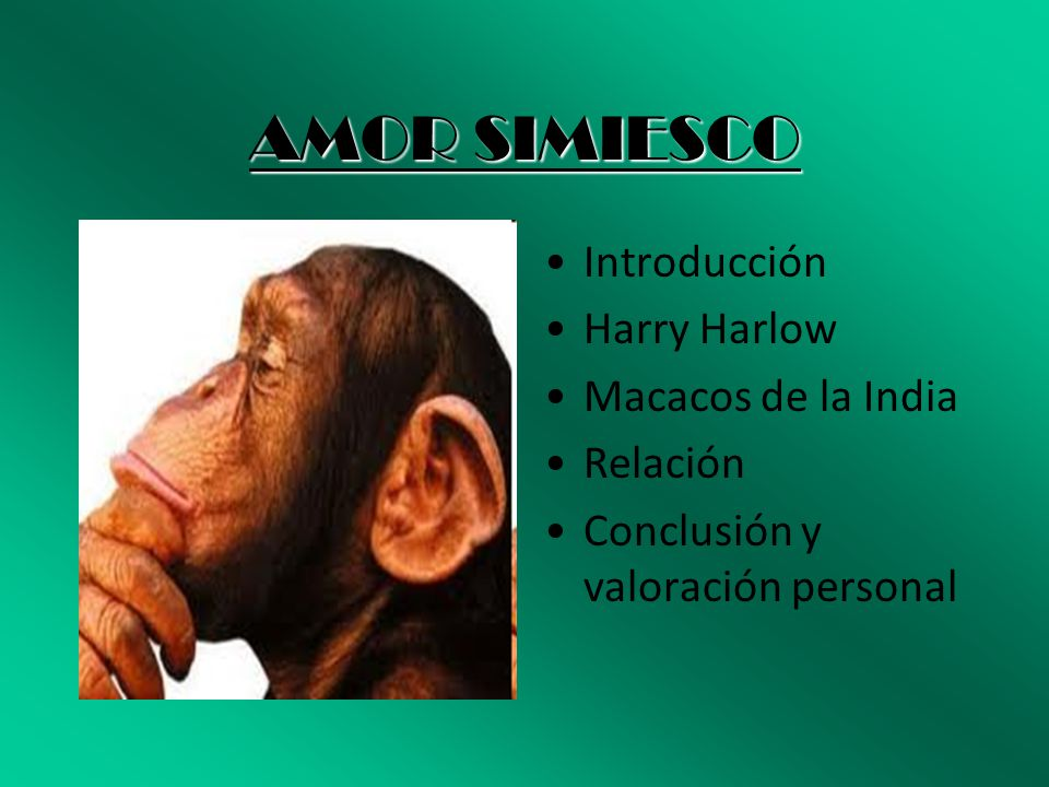 AMOR SIMIESCO Introducción Harry Harlow Macacos de la India Relación
