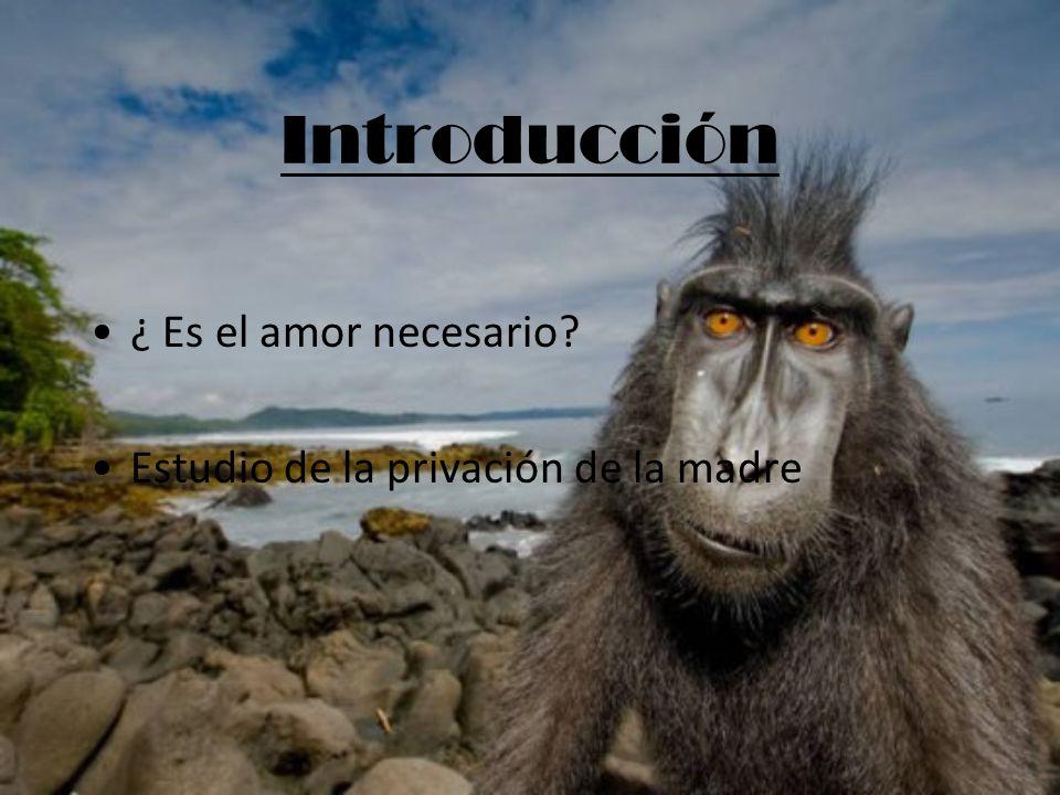 Introducción ¿ Es el amor necesario