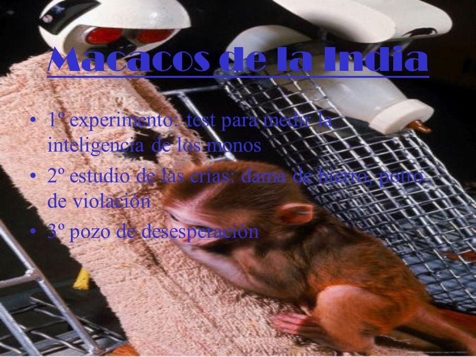 Macacos de la India 1º experimento: test para medir la inteligencia de los monos. 2º estudio de las crías: dama de hierro, potro de violación.