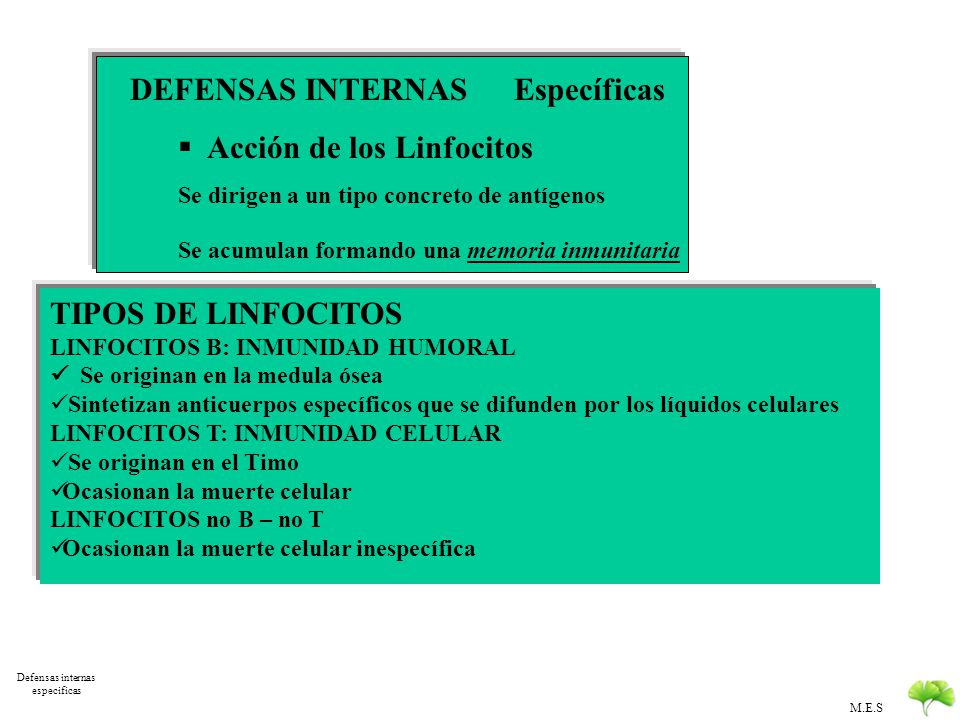 Defensas internas especificas
