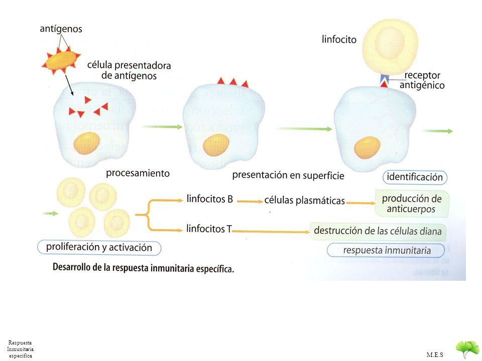 Respuesta Inmunitaria especifica