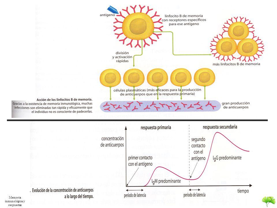 Memoria inmunológica y respuestas