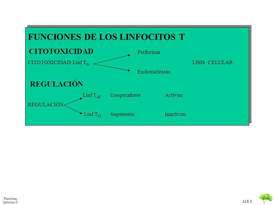 Funciones linfocitos T