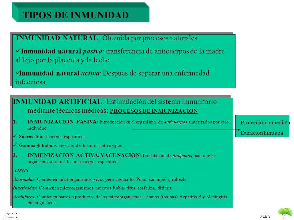 TIPOS DE INMUNIDAD INMUNIDAD NATURAL: Obtenida por procesos naturales.