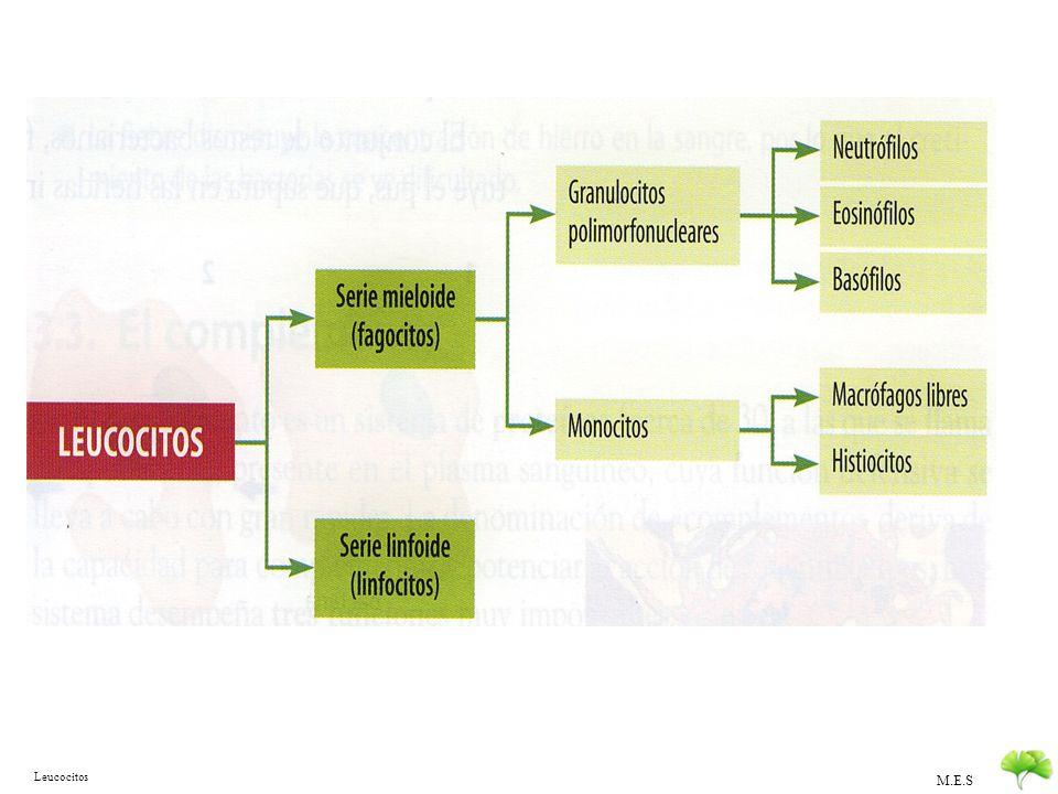 Leucocitos